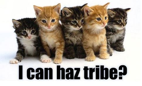 lolcat-tribe