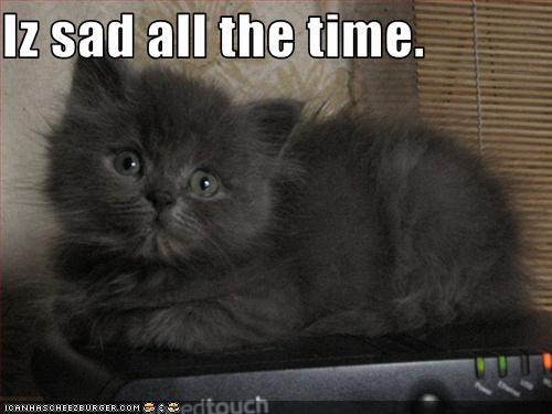 sadcat1