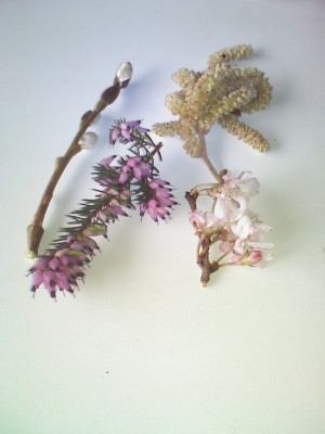 pussy willow, heather, hazelnut catkin, and crabapple flower